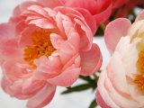 Delicate Blossom II