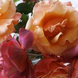 Rose Bouquet Close Up II