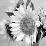 Sunny Sunflower II