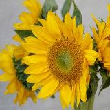 Sunny Sunflower IV