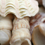 Shells I