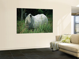Endangered White Rhinoceroses
