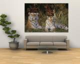 A Portrait of Two Captive Siberian Tigers