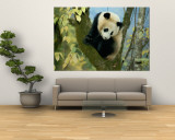 Juvenile Giant Panda