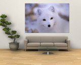 A Portrait of an Arctic Fox