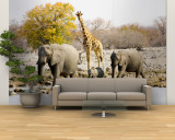 African Elephants and Giraffe at Watering Hole  Namibia