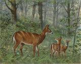 Deer Family I