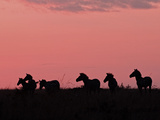 Burchell's Zebras Silhouetted in the Morning Sky of the Maasai Mara  Kenya