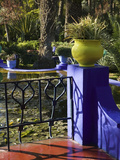 Villa Gardens  Jardin Majorelle and Museum of Islamic Art  Marrakech  Morocco
