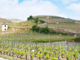 Le Pavillon Vineyard with Domaine M Chapoutier  Tain L&#39;Hermitage  Drome  France