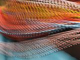 Samburu Dancer's Colorful Necklace  Samburu National Reserve  Kenya