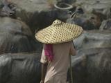 Farmer Herding Water Buffaloes  Orissa  India
