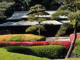 Azaleas at the Imperial Palace East Gardens  Tokyo  Japan
