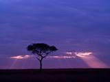 Sunrise  Maasai Mara  Kenya