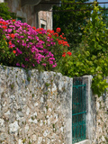 Vacation Villa Wall with Flowers  Matsoukata  Kefalonia  Ionian Islands  Greece