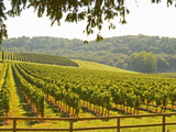 Vineyard and Valley with Forest  Chateau Carignan  Premieres Cotes De Bordeaux  France