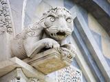 Gargoyle of Duomo Pisa  Pisa  Italy