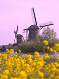 Windmills Along the Canal in Kinderdijk  Netherlands