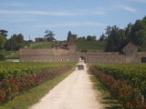 Chateau Grand Mayne and Vineyard  Saint Emilion Grand Cru Classe  Saint Emilion  Bordeaux  France