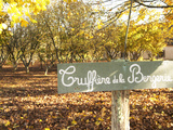 Sign at Entrance to Truffiere De La Bergerie (Truffiere) Truffles Farm  Ste Foy De Longas  Dordogne