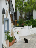 Street View with Black Cat  Manolates  Samos  Aegean Islands  Greece