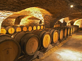 Oak Barrels in Cellar at Domaine Comte Senard  Aloxe-Corton  Bourgogne  France