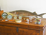 Table of Fish  Caviar  Tins  Glass Jars with Pate