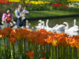 Tulips  Tourists and Swans in Keukenhof Gardens  Amsterdam  Netherlands