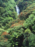 Waterfall in a Tropical Rain Forest  Hawaii  USA
