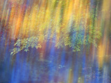 Trees Reflected in Car Window