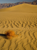 Sand Dunes in Morning Light  Mesquite Flats  Death Valley National Park  California  USA