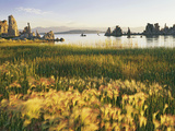 Wind Blows Squirrel-Tail Barley Next to Mono Lake with Tufas  California  USA