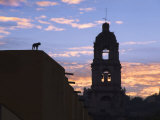 Sunrise with Church and Dog on Roof  San Miguel De Allende  Mexico