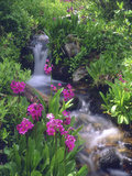 Wildflowers Along Flowing Stream in an Alpine Meadow  Rocky Mountains  Colorado  USA