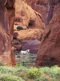 Red Rock  White Horse  White Mountains  Canyon De Chelly  Arizona  USA