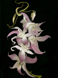 Abstract Orchid Artwork