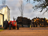 Farm with Old Red Tractor and Firewood  Montevideo  Uruguay