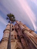 The Parroquia Church and Palm Tree  San Miguel De Allende  Mexico