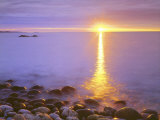 Sunrise on Fog and Shore Rocks on the Atlantic Ocean  Acadia National Park  Maine  USA