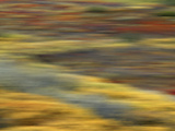 Colorful Abstract of Autumn Tundra Colors  Denali National Park  Alaska  USA