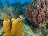 Couple Scuba Diving  Sponge Formations  Half Moon Caye  Barrier Reef  Belize