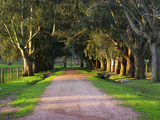 Tree Lined Country Road at Sunset  Montevideo  Uruguay