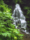 Fairy Falls Tumbling Down Basalt Rocks  Columbia River Gorge National Scenic Area  Oregon  USA