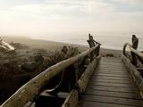 Driftwood Bridge Entrance from Trail  Kalaloch Beach  Olympic National Park  Washington  USA