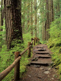 Rainforest with Trail  Sol Duc Valley  Olympic National Park  Washington  USA