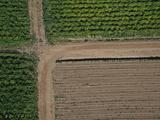 Aerial View of Fields  Colfax  Washington  USA