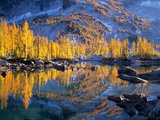 Golden Larch Trees Reflected in Leprechaun Lake  Enchantment Lakes  Alpine Lakes Wilderness