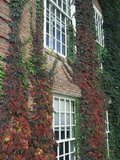 Hanover Ivy on Dartmouth College Building  New Hampshire  USA