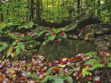 Autumn Colors and Boulders in the Green Mountains  Vermont  USA