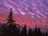 Sunset Painting Clouds Over Forest  Three Sisters Wilderness  Oregon  USA